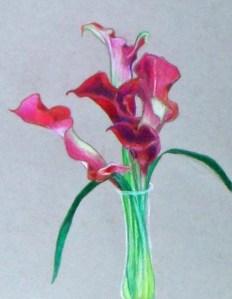 Calla Lilies 12-23-12